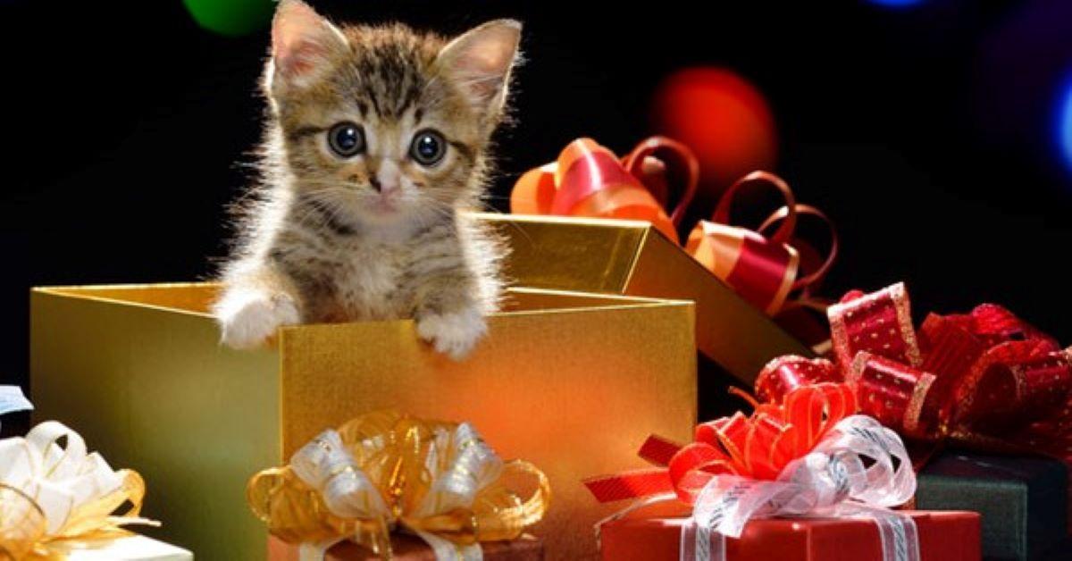 gattino in mezzo ai regali