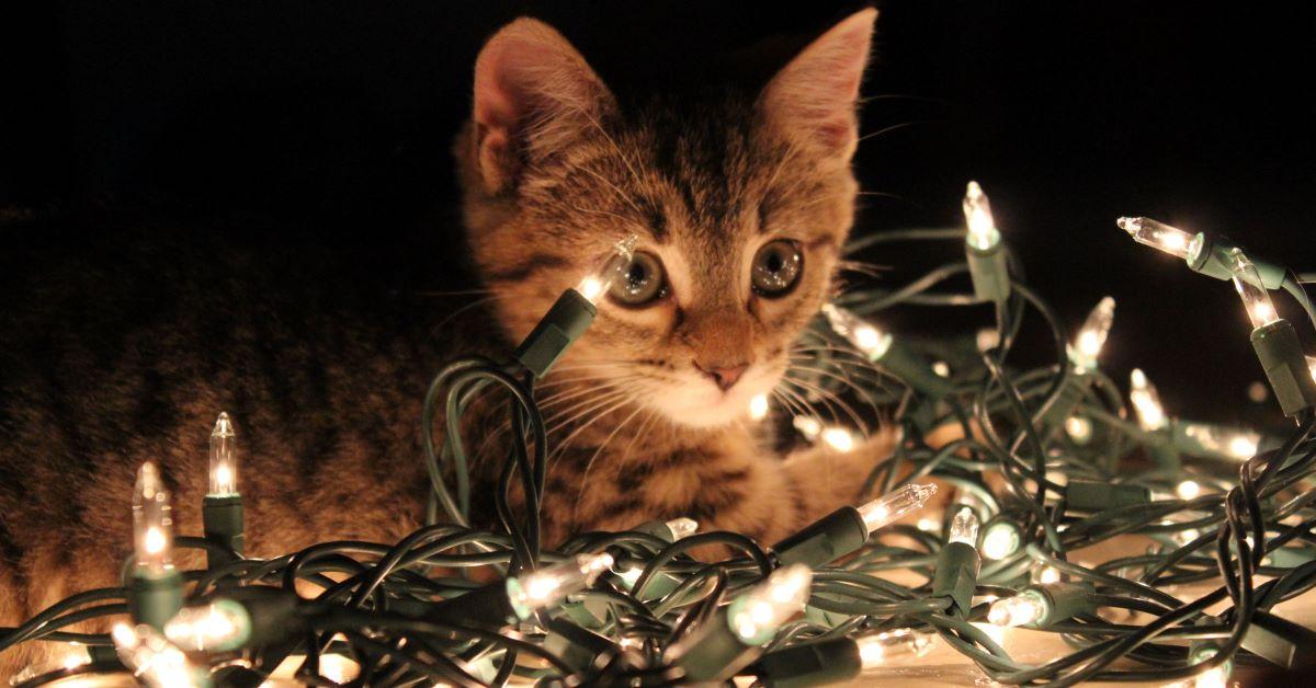 gattini a natale foto