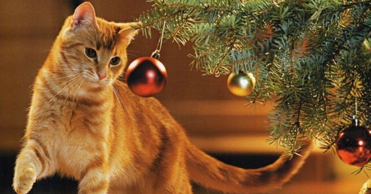 gatto guarda l'albero