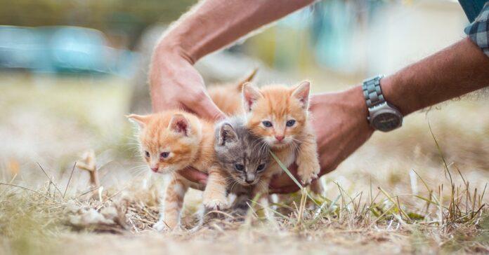 Gattini abbandonati salvati da una mamma umana
