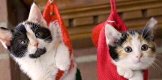 gattini al sicuro a natale