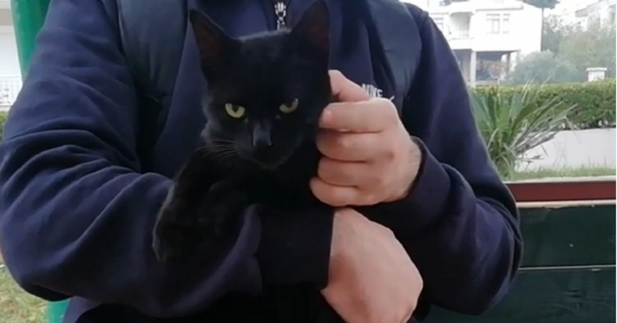 gattino nero non vuole essere accarezzato
