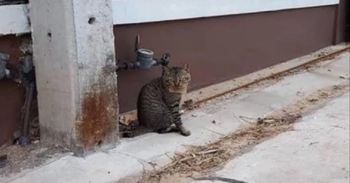 Gattino scompare per tre giorni e torna con un biglietto al collo