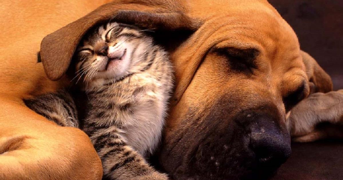 gattino e cane orecchio