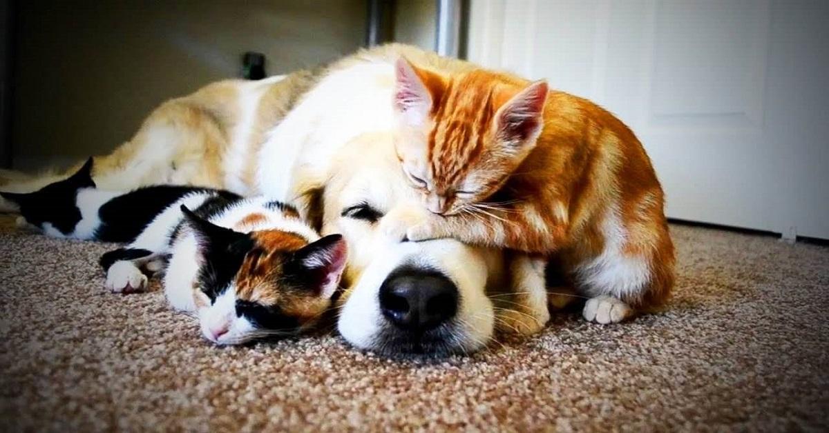 gatti e cane