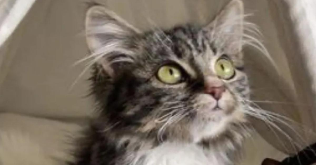 Giselle gattina soriano video