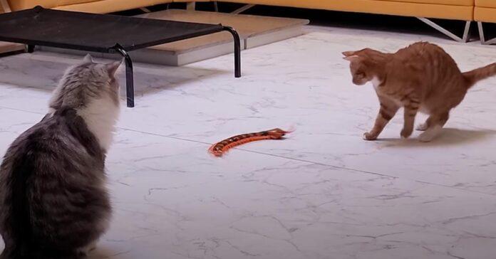 Gatti che giocano con un centopiedi