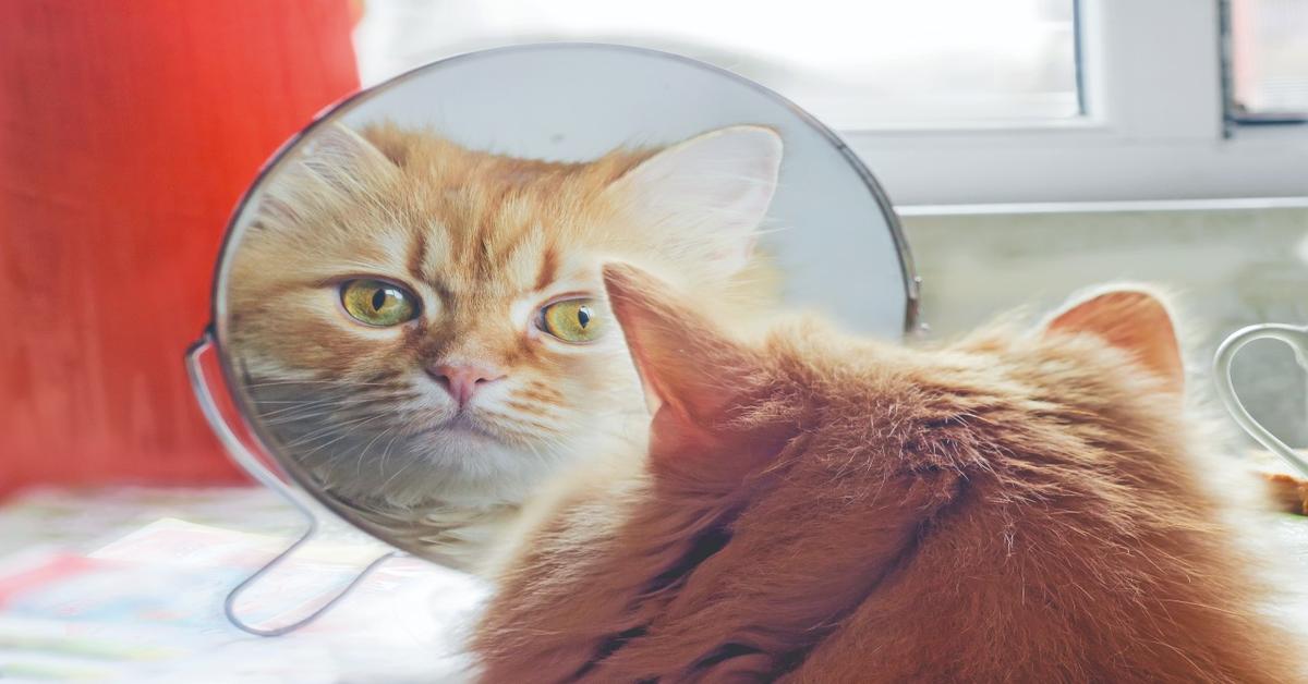 gatto rosso si guarda allo specchio