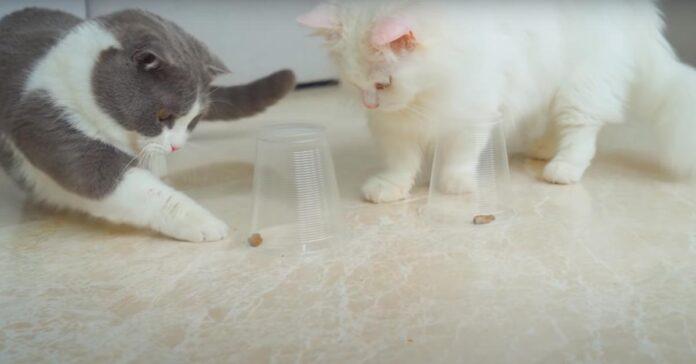 Gatti di fronte a dei bicchieri