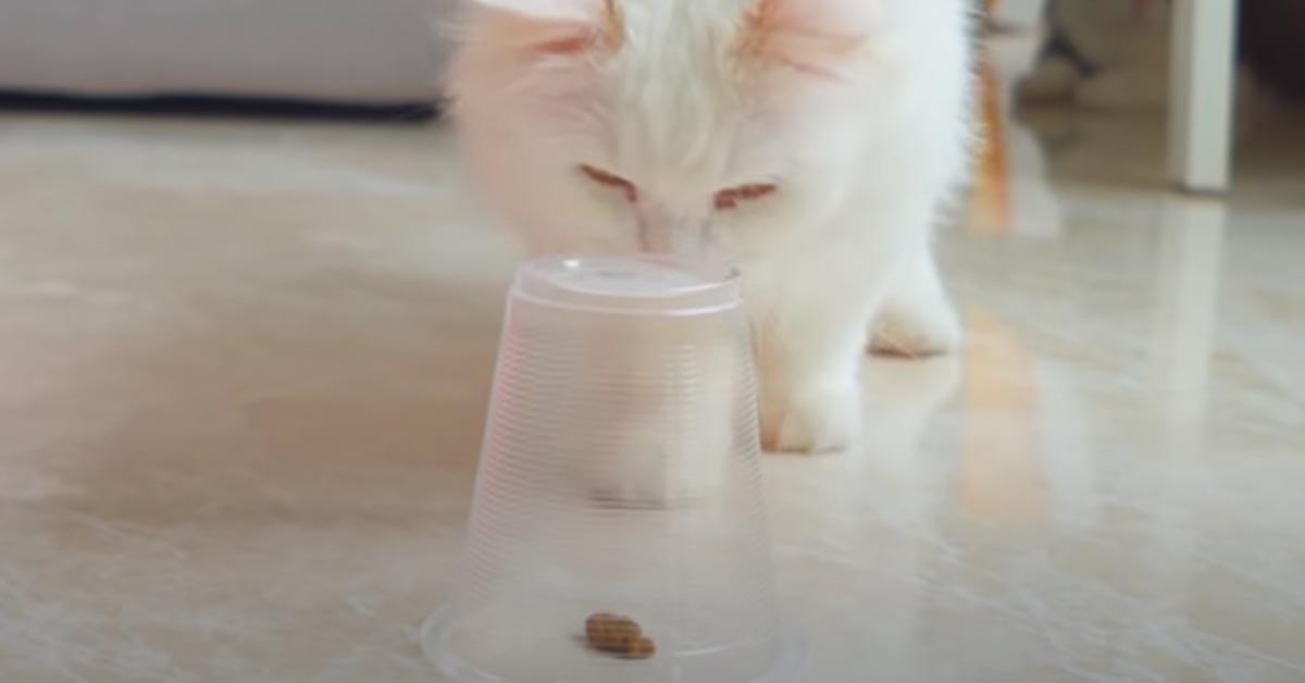 Gatto di fronte ad un bicchiere