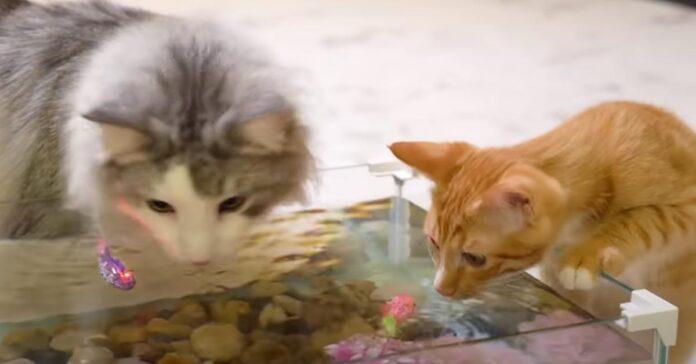 Gatti che osservano dei pesci