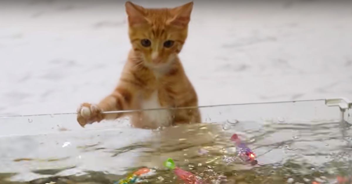 Gatto che osserva dei pesci