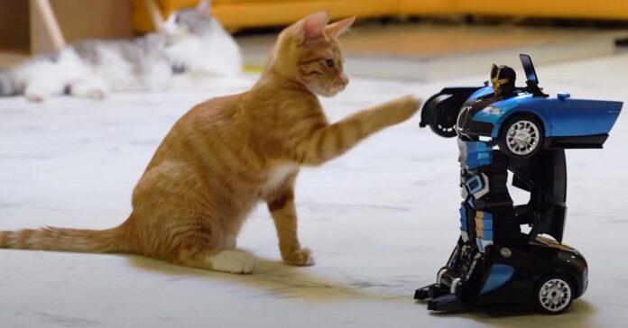Gatto affronta un robot
