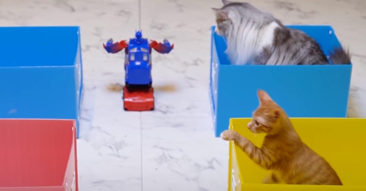 Gatti affrontano un robot