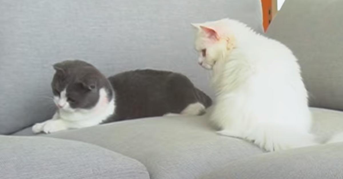 Gatti su un divano