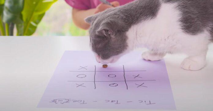 Gatto che gioca a tris