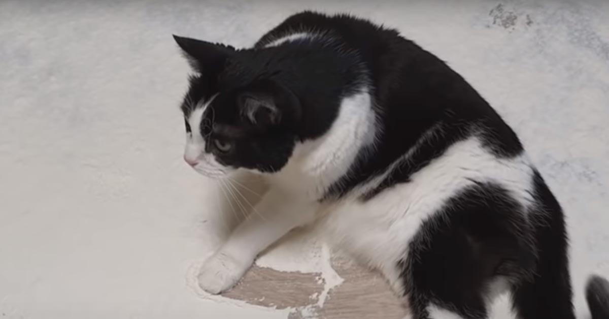 Gatto che gioca con la farina