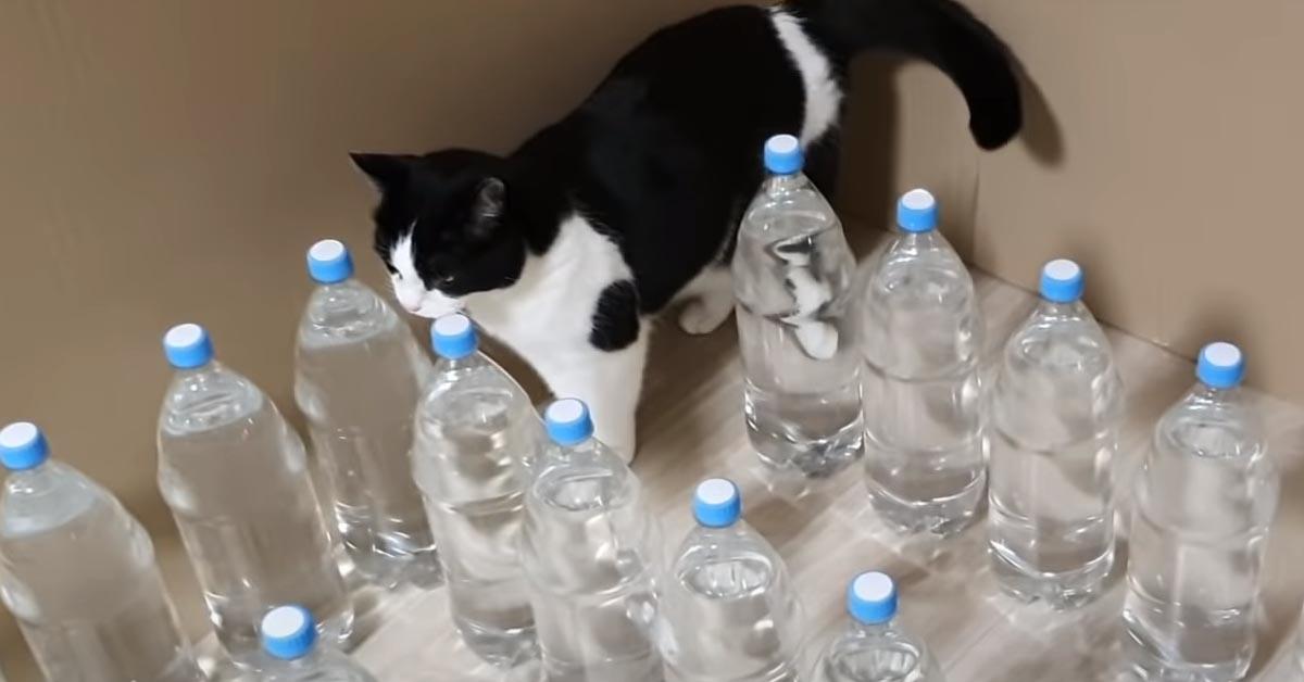 Gatto con delle bottiglie