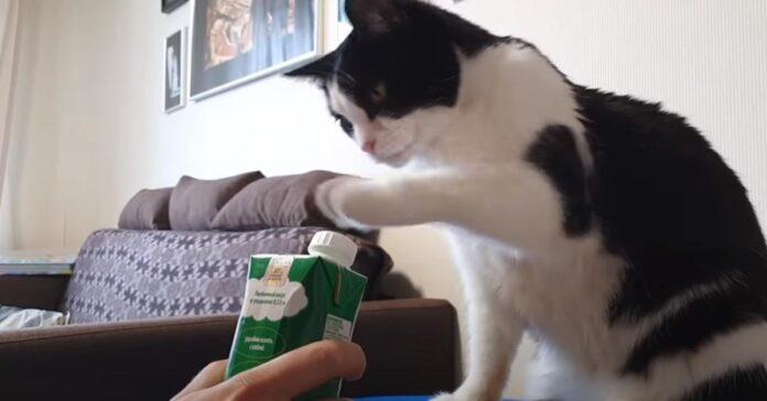 Gatto apre una bottiglia