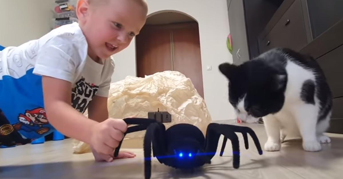 Gatto con un bambino e un ragno peluche