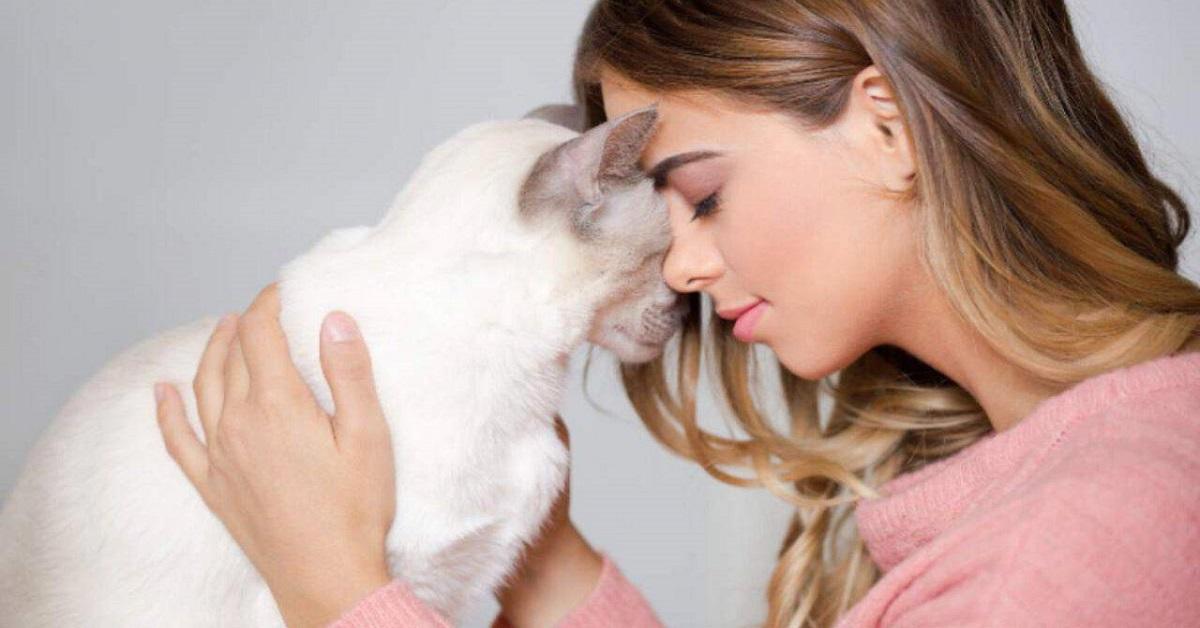 testa contro testa gatto e donna