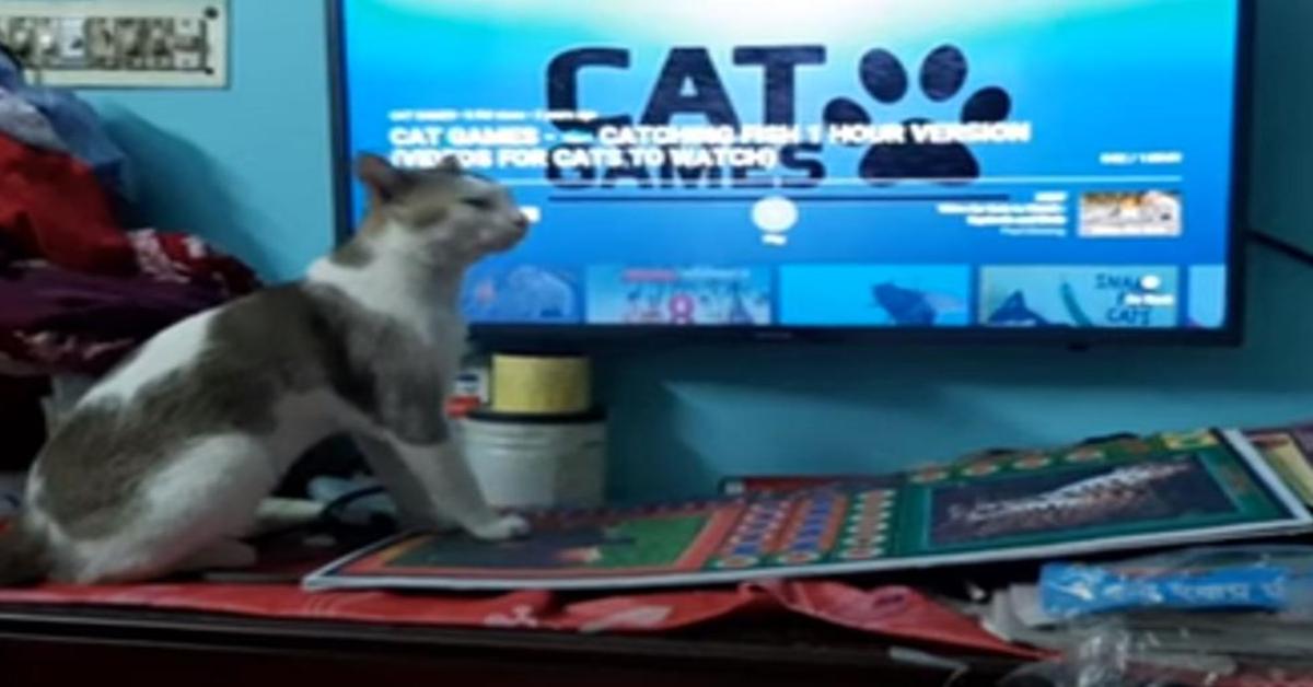 gattino guarda videogioco di pesci alla tv