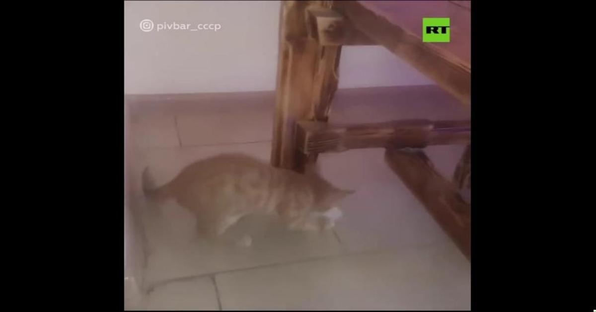gatta scappa con soldi
