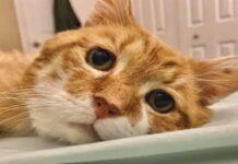 Bubby gattino soriano video
