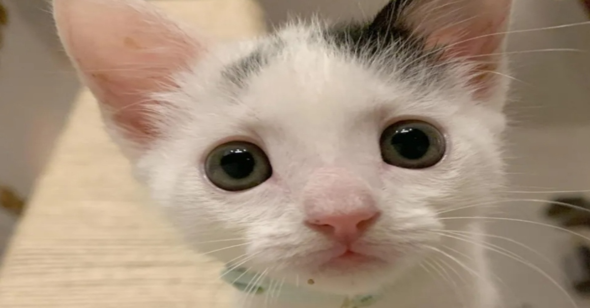 Clove gattina video