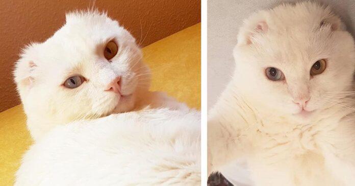 Gattino senza le orecchie