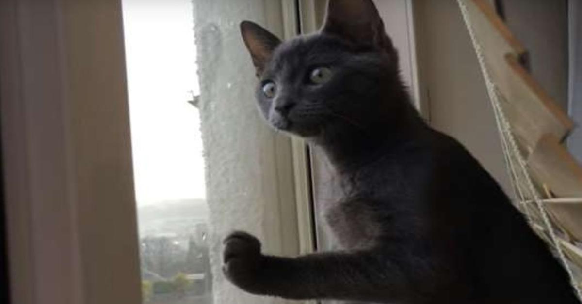 Zoofy gattino neve video