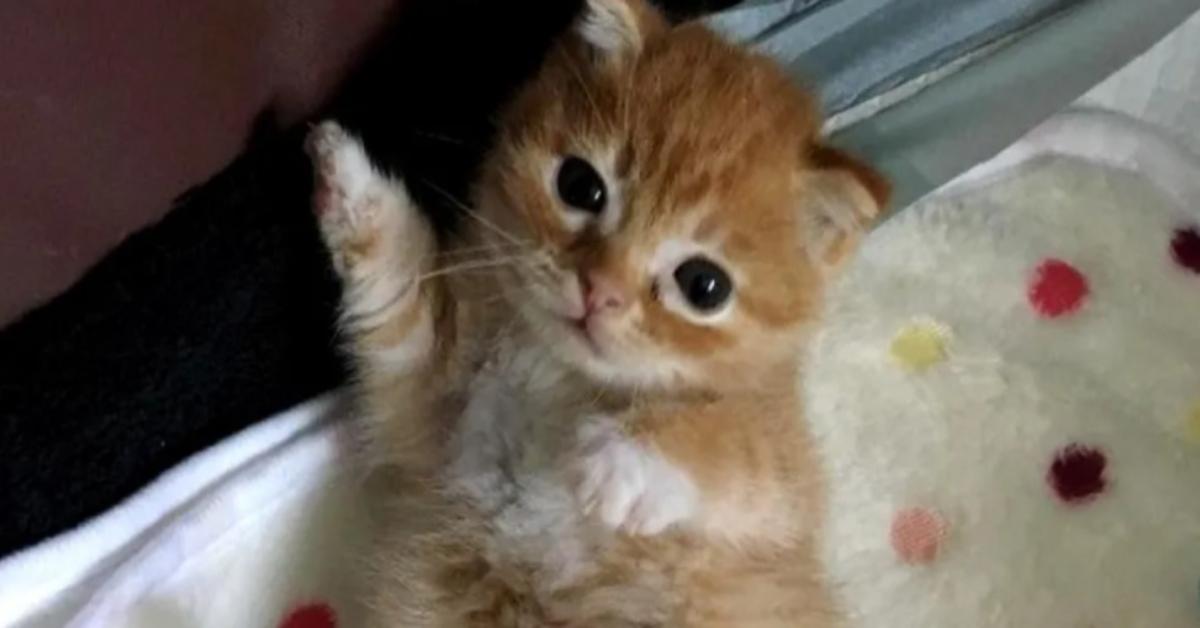 leo gattino video