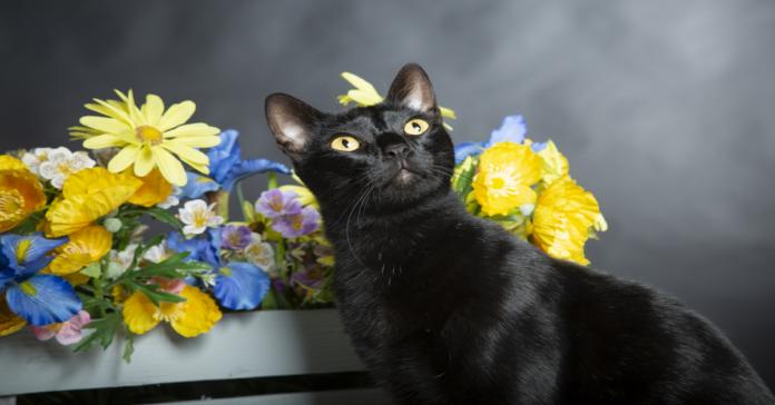 gatto nero con fiori