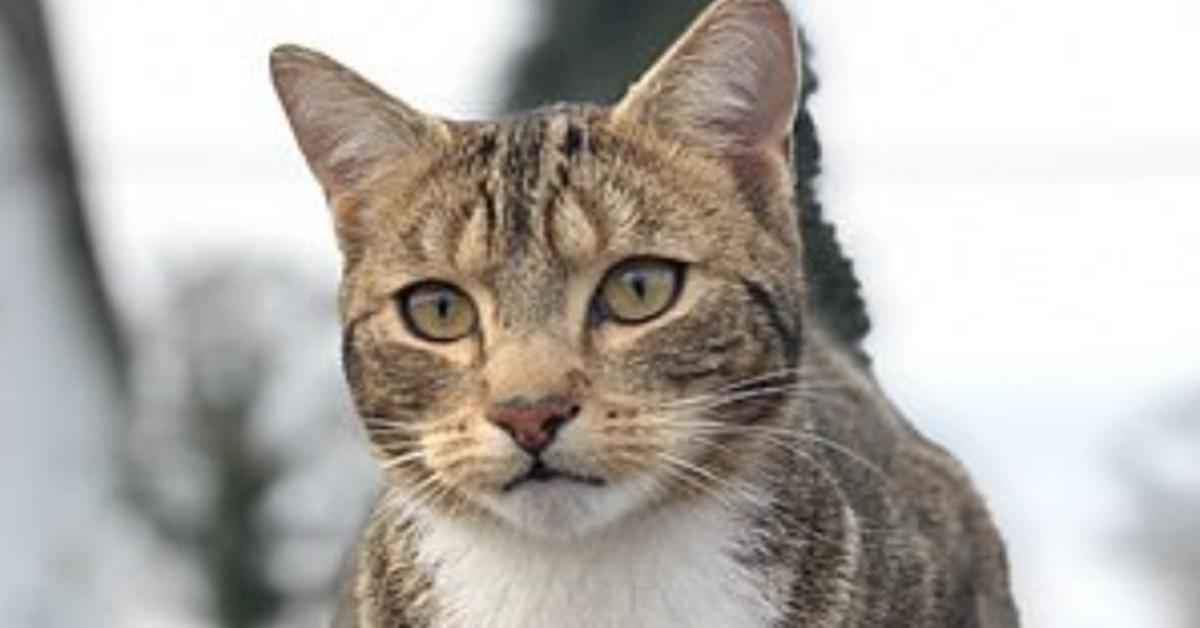 Milo gattino porta video