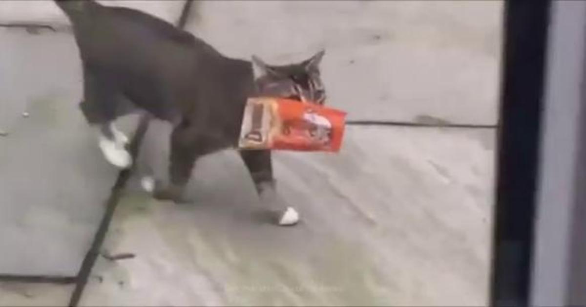 gatto con dolci in bocca