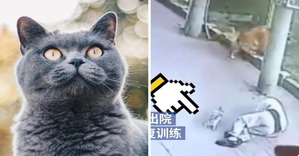 gatto cade in testa a un anziano che sviene