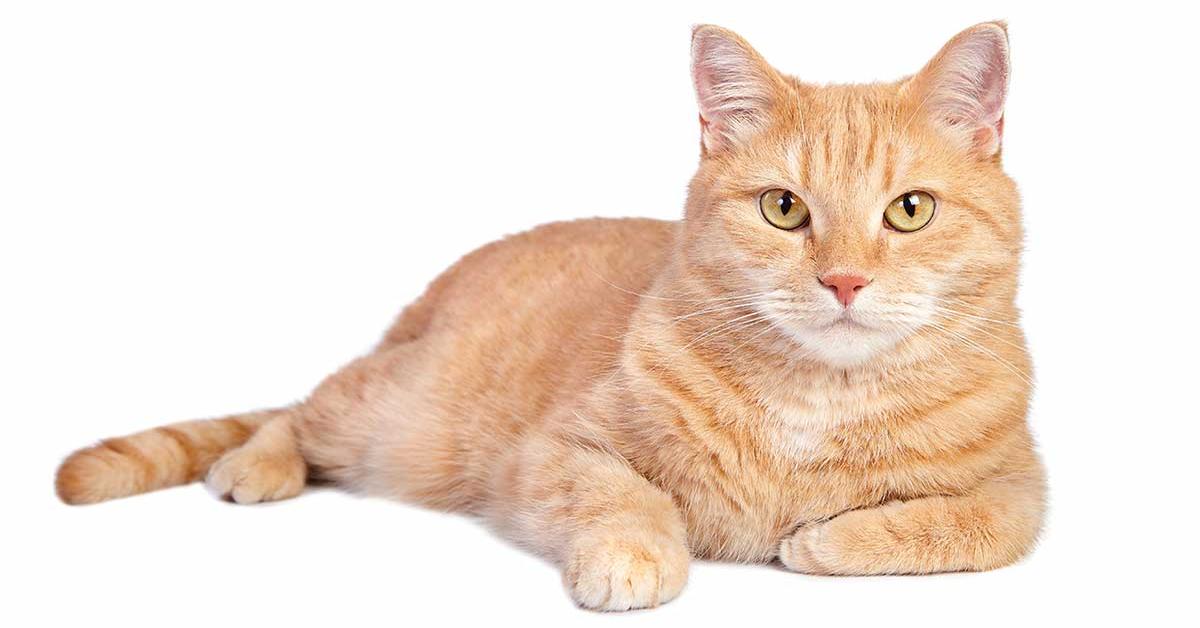 gatto arancione seduto