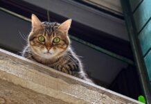 gatto in alto
