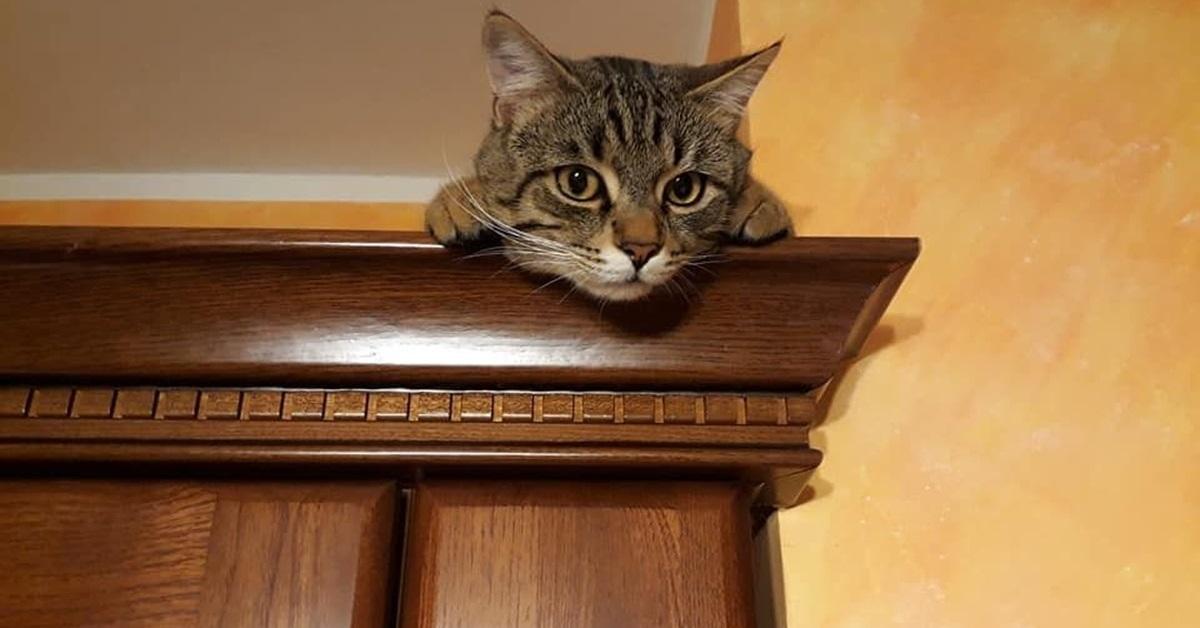 gatto su armadio