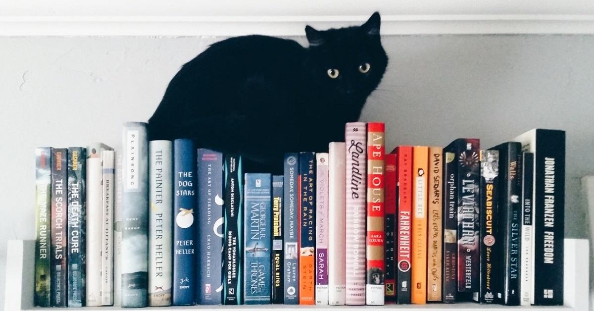 gatto su libri