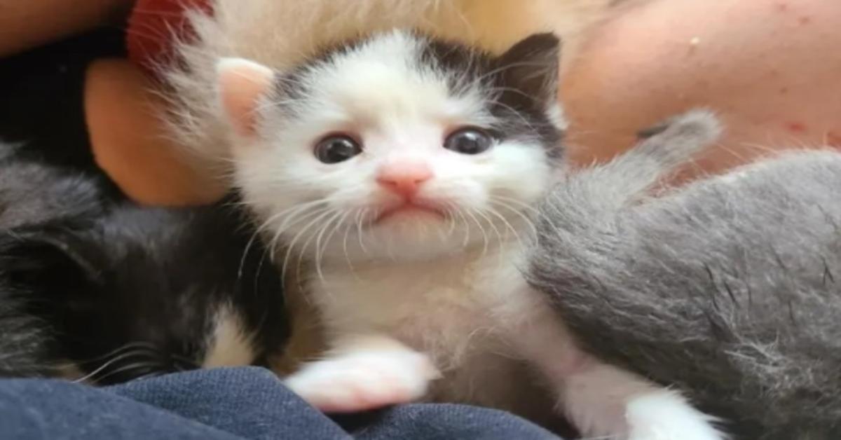 Pitikis, il gattino che ha ritrovato la felicità grazie a una famiglia dal cuore d'oro (VIDEO)