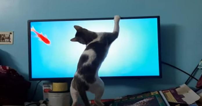 gatto cerca di prendere pesce in tv