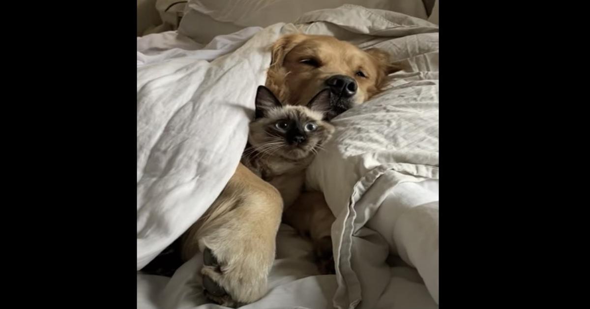 cane e gatto siamese dormono abbracciati