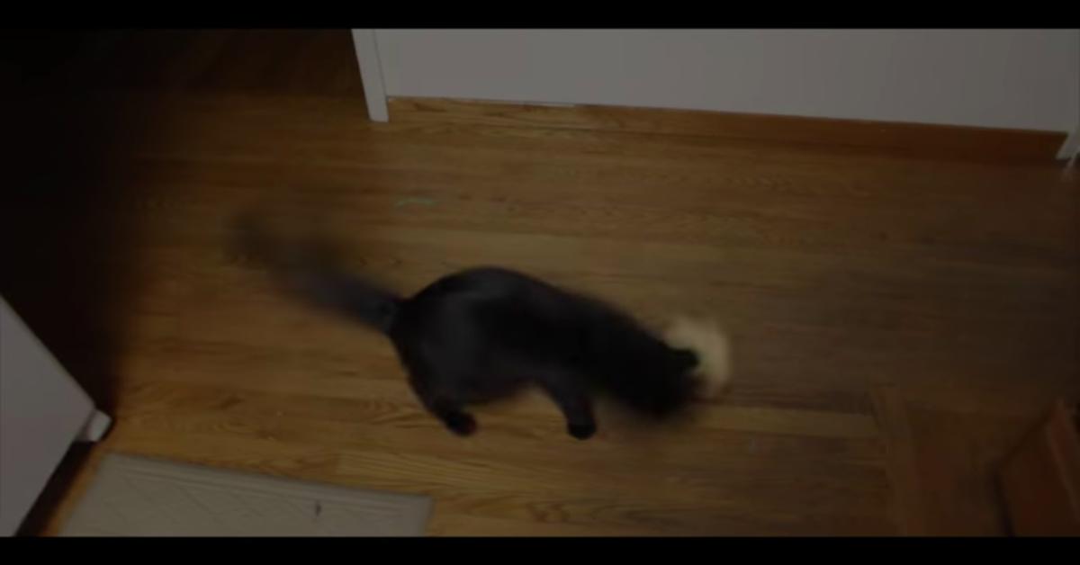 gatto nero in piedi gioca con un panino
