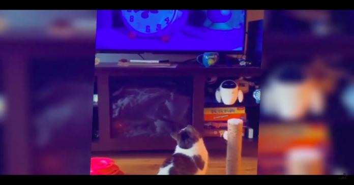 gatto guarda tv