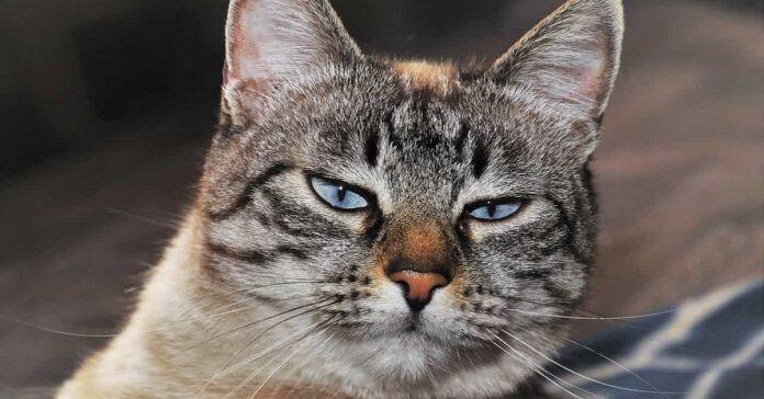 gatto offeso