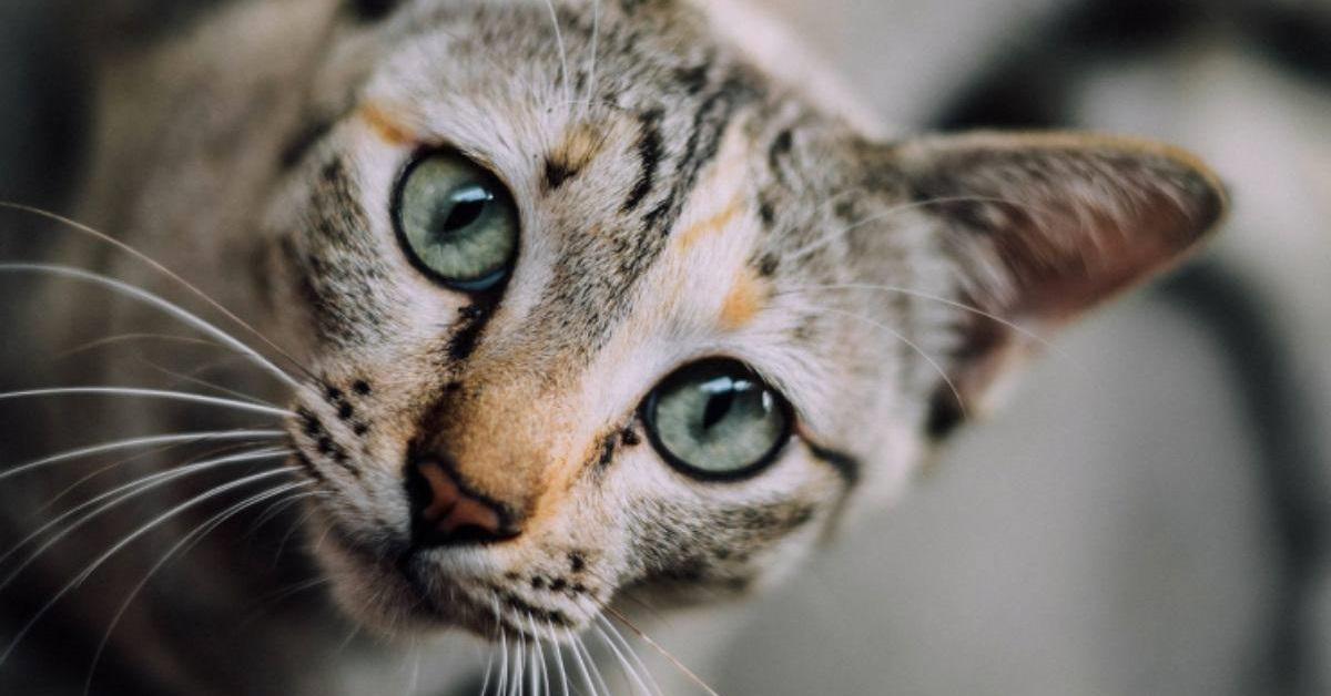 gatto disorientato