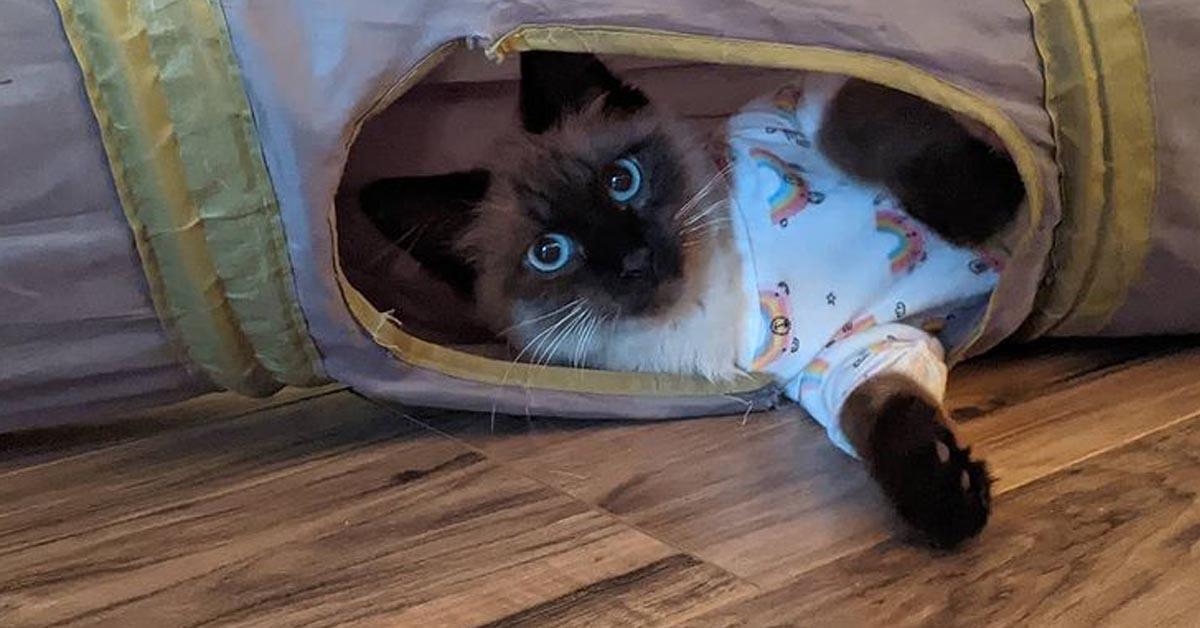 Gattino sdraiato che osserva