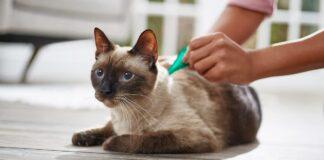 mettere l'antipulci al gatto