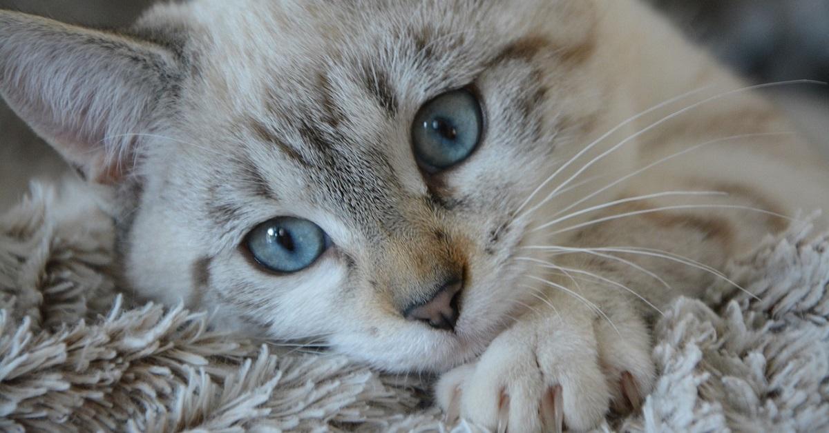 gatto accoccolato